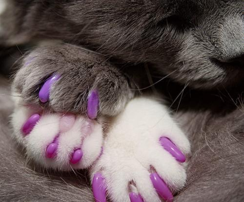 For Cats Safe Alternative Declawing Snags?